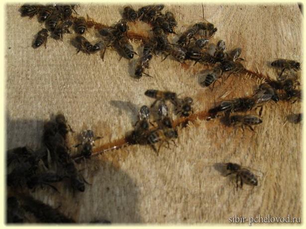 поилка очень важна для пчел весной