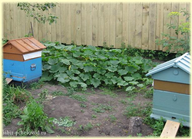 куда поставить пчелиный улей
