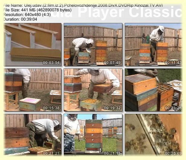 Как сделать улей УДАВ для пчел (видео инструкция)