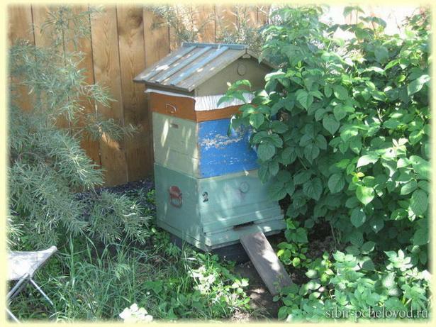 фото пасека на огороде