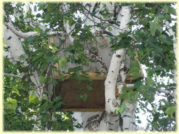 куда ставить ловушку для пчел