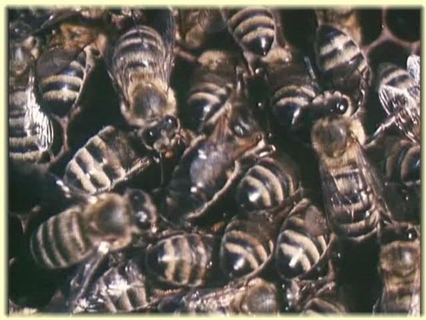 Пчеловодство в Советском Союзе скачать видео