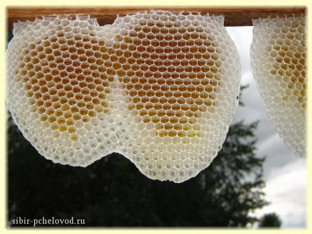 новые пчелиные соты белоснежны, как сахар